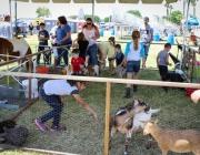 1_Petting_Zoo_1